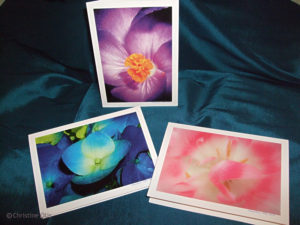 Hydrangea, Pistil, Blushing